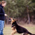 Le comportement du chien – Auxiliaire vétérinaire / A.S.V en e-learning