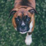 Formation éleveur canin + Acaced
