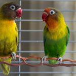 Les oiseaux – Auxiliaire vétérinaire / A.S.V en e-learning