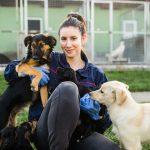 Création d'entreprise : Elevage canin (chien)